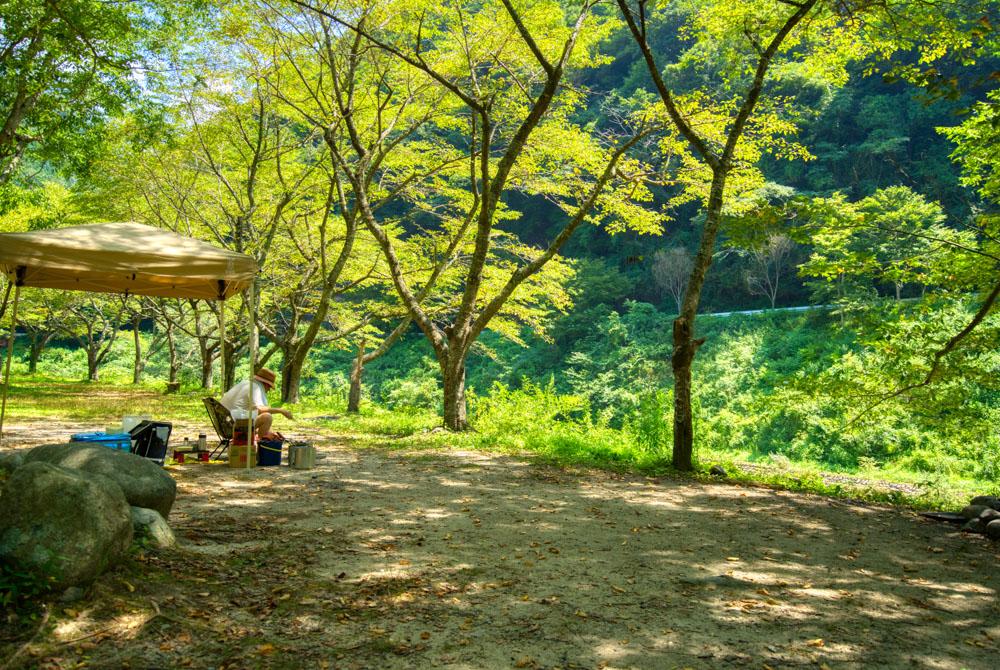 新平ヶ原キャンプ場 林間エリア