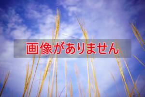 萩市 田万川キャンプ場