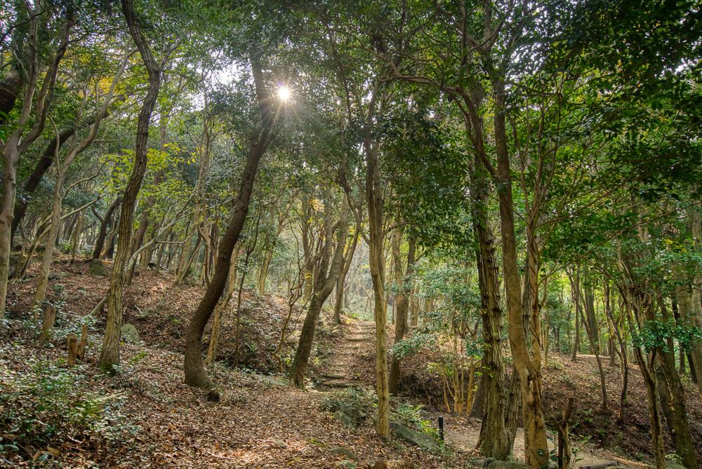 深坂自然の森 キャンプサイト