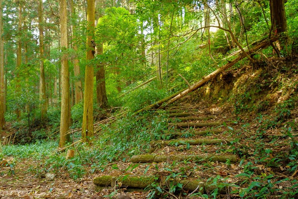 林間キャンプ場 キャンプサイト