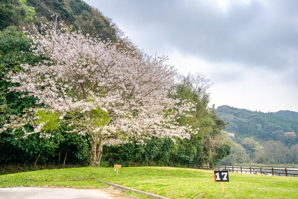粟野川河川公園 17番サイト