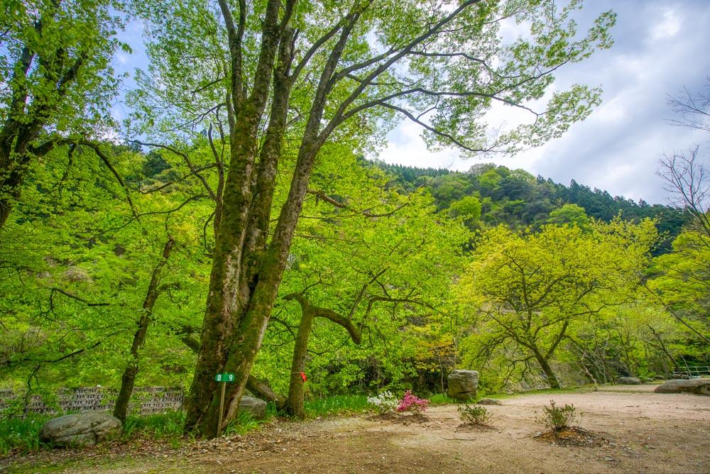 須川家族村オートキャンプ場 キャンプサイト1