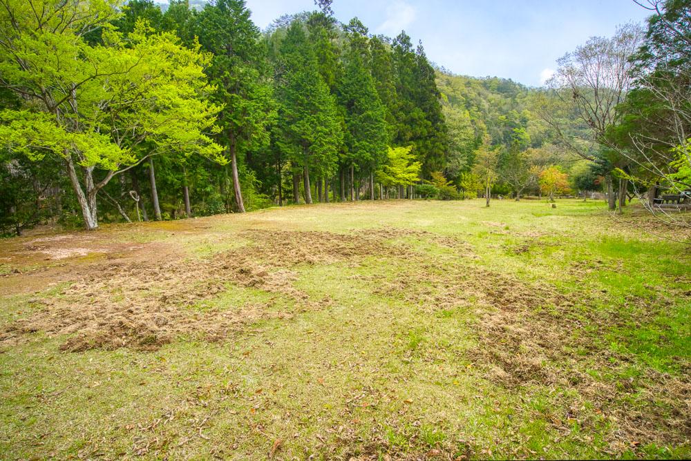 小瀬川オートキャンプ場 イノシシが荒らした跡
